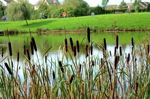 Dowd's Farm Lake & Jetty